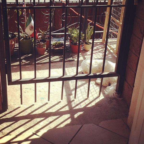 Así se paso la tarde... durmiendo junto a las plantas en la entrada del departamento, aprovechando el sol, esperando su paseo al parque.